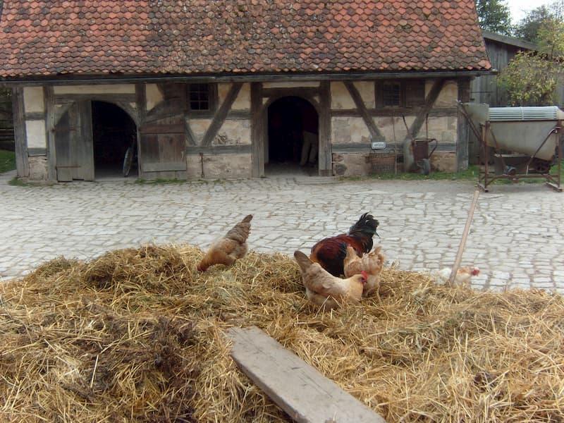 Ausflugsziele in Franken: Misthaufen und Hühner im Freilandmuseum Bad Windsheim: Bewirtschaftung