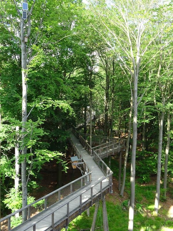 Baumwipfelpfad Steigerwald: Stege durch den Wald