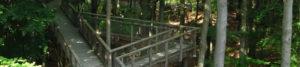 Ausflugsziele in Franken: Baumwipfelpfad Steigerwald Titelbild